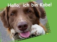 Hallo, ich bin Kobe!